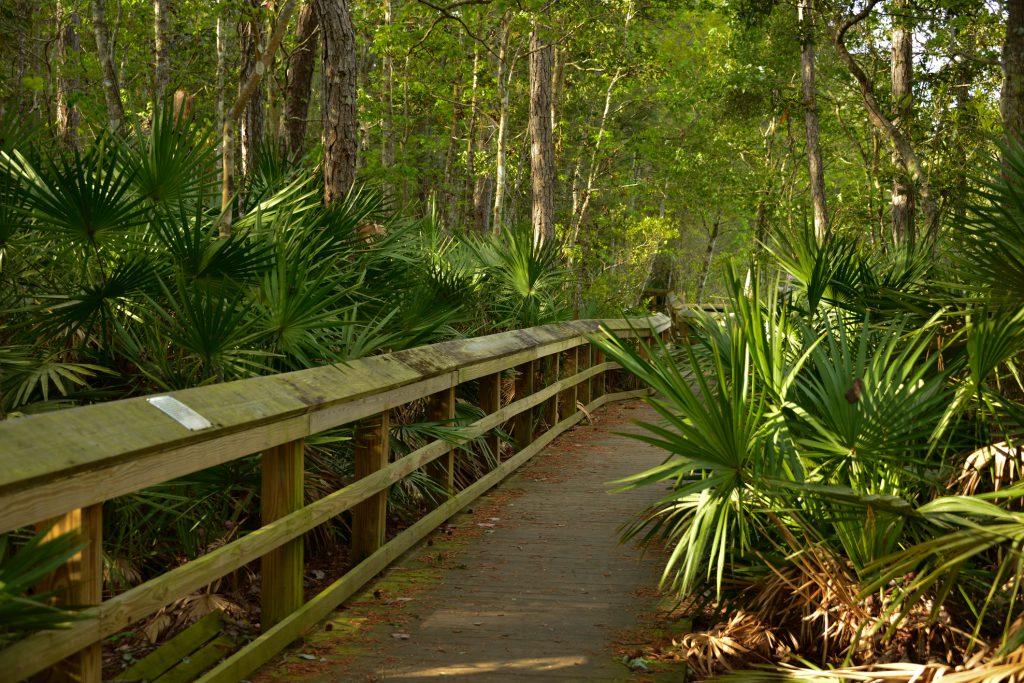 Wooden boardwalk along Goldenrod trail on a cloudy Florida day, Sunshine on leafs
